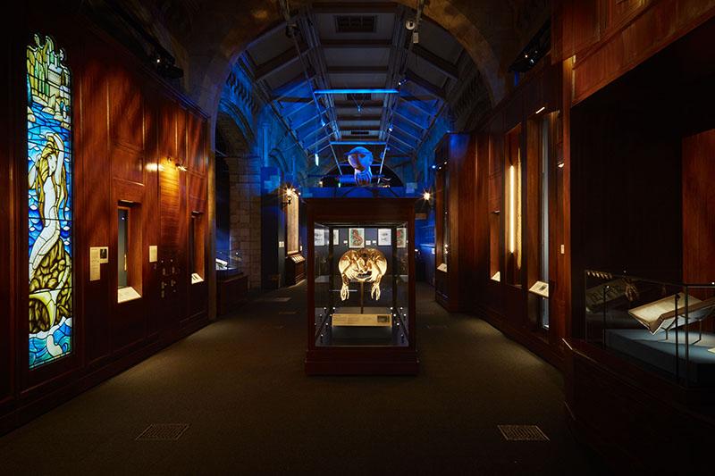 【博物之島專文】奇幻生物無所不在!倫敦自然史博物館推出「神奇怪獸:大自然的奇觀」特展