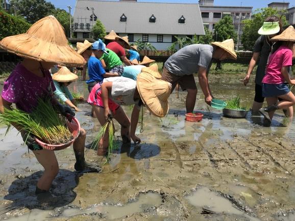 山水米有機稻場:2018/03/10-11 【107年一期稻作 x 一起插秧趣】