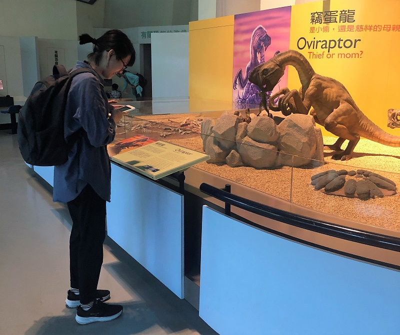 閱讀展示說明文後,解開科博館「探索科博尋寶趣」中的謎題,也瞭解竊蛋龍的發現歷史與特性。