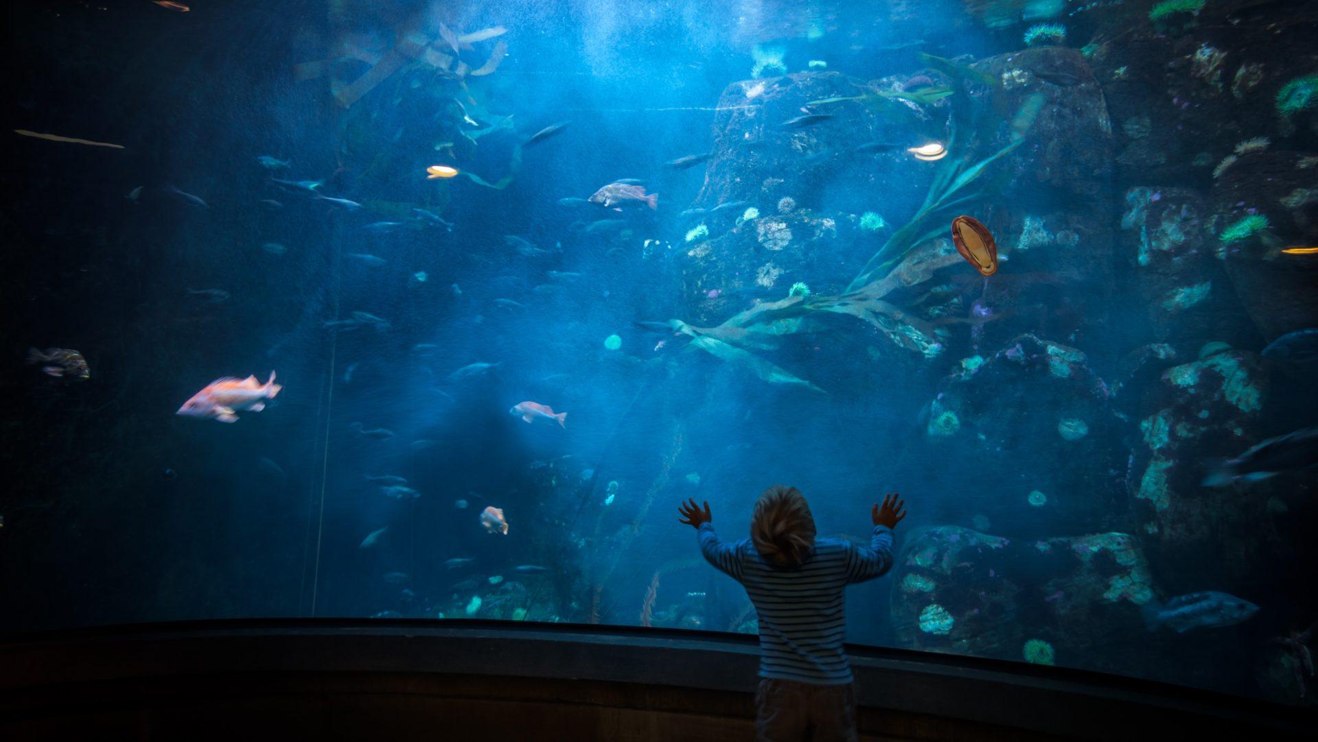 【博物之島新訊】讓孩子引爆你的好奇心!雪德水族館「好奇海洋」影片獲AAM大獎
