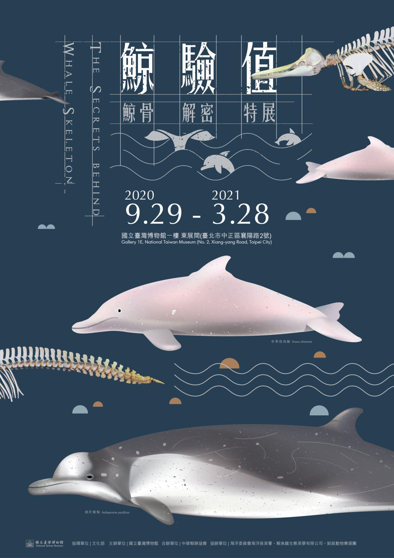 國立臺灣博物館:即日起至2021/3/28【鯨驗值-鯨骨解密特展】