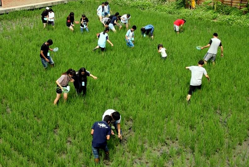 山水米有機稻場:【九、十月活動:苑裡一日小農夫友善耕作-除稗體】
