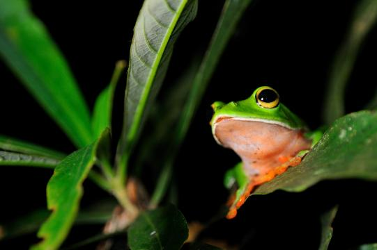 【專文】ICOM-NATHIST的臺北宣言和生物保育