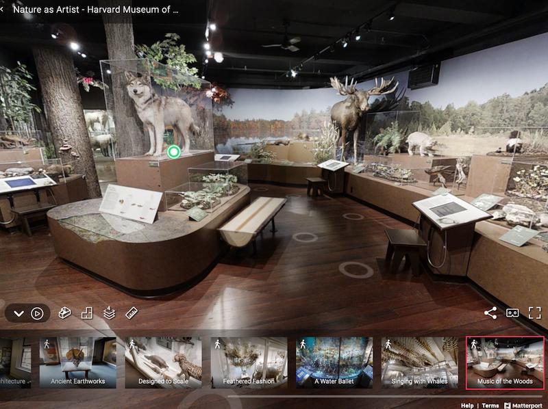 【博物之島新訊】原來線上典藏庫這麼有趣!哈佛大學博物館群「非凡事物」典藏計畫